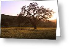 California Hwy 25 Oak Greeting Card