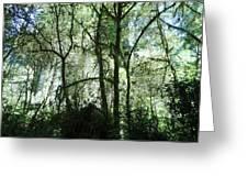 California Jungle Greeting Card