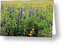 California Meadow Greeting Card