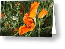 California Morning Greeting Card