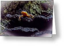 California Newt 2 Greeting Card