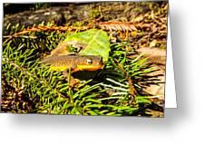 California Newt 4 Greeting Card
