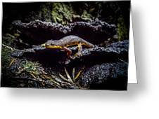 California Newt  Greeting Card