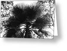 California Palm Tree Greeting Card