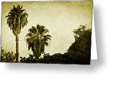 California Palms Greeting Card
