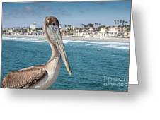California Pelican Greeting Card by John Wadleigh