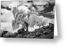 California Pepper Tree Greeting Card