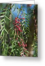 California Pepper Tree Leaves Berries I Greeting Card