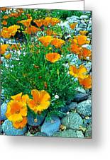 California Poppie In River Rock Greeting Card