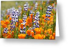 California Poppies And Lupine Wildflowers Greeting Card