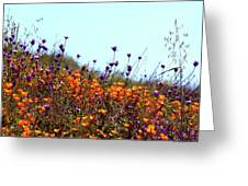 California Poppies And Wildflowers Greeting Card
