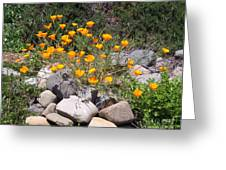 California Poppies Photograph Greeting Card