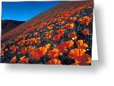 California Poppies Quartz Hill Greeting Card