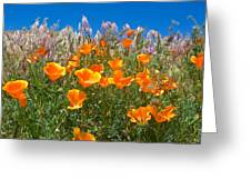 California Poppies, White Grasses And Blue Sky In Windy Antelope Valley Ca Poppy Reserve Greeting Card