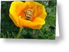 California Poppy And Honey Bee Greeting Card
