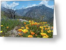 California Poppy And Mountain Panorama Greeting Card