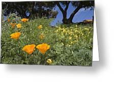California Poppy Eschscholtzia Greeting Card