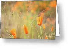 California Poppy Field 4 Greeting Card