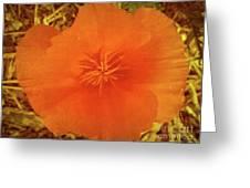 California Poppy Glow Greeting Card