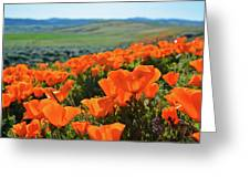 California Poppy Reserve Greeting Card