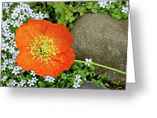 California Poppy Rock Garden Greeting Card