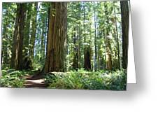 California Redwood Forest Trees Art Prints Greeting Card