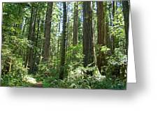 California Redwood Trees Forest Art Prints Greeting Card