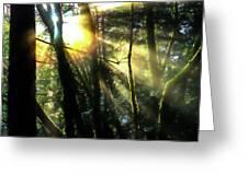 California Redwoods Greeting Card by Richard Ricci