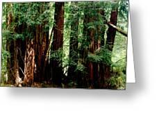 California Redwoods Greeting Card