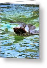 California Sea Lion-1611 Greeting Card
