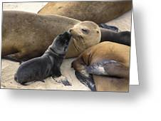California Sea Lion And Newborn Pup San Greeting Card by Suzi Eszterhas