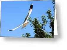California Seagull Greeting Card