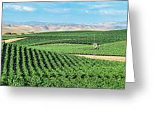 California Vineyards 1 Greeting Card
