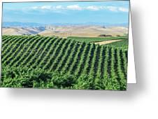 California Vineyards 2 Greeting Card