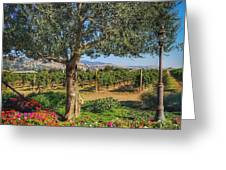 California Wine Country Greeting Card