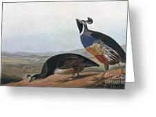 Californian Partridge Greeting Card