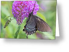 Call Of Nature Greeting Card
