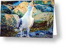Call Of The Gull Greeting Card