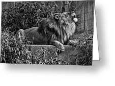 Call Of The Wild Bw Greeting Card