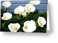 Calla Lilies- Oregon Greeting Card