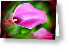Calla Lilly Greeting Card by Kathleen Struckle