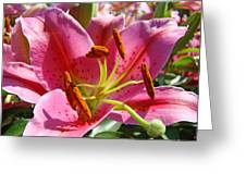 Calla Lily Art Prints Pink Lilies Flowers Baslee Troutman Greeting Card