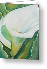 Calla Lily Greeting Card