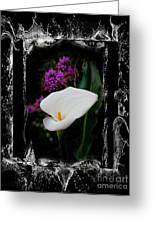 Calla Lily Splash Greeting Card