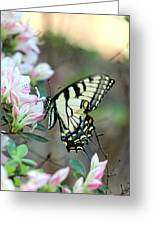 Callaway Butterfly Greeting Card
