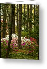 Callaway Gardens Spring Azaleas Greeting Card