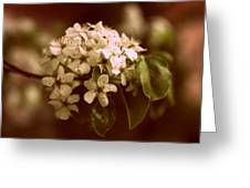 Callery Pear Blossoms Greeting Card