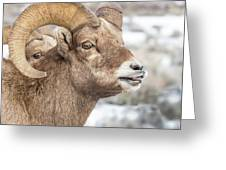 Calling All Ewes Greeting Card