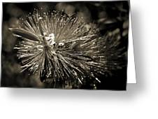Callistemon II Greeting Card