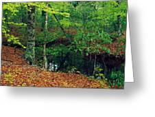 Calm Stream Through Beech And Magnolia Greeting Card